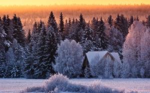 snowywood